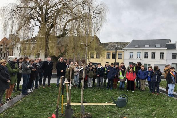 Anne Frankboom geplant naast Kazerne Dossin in Mechelen