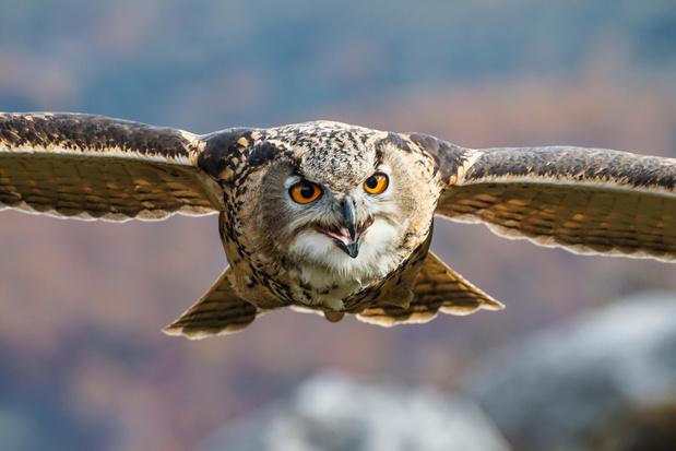 Begijn Le Bleu lanceert vogelmagazine Fwiet: 'Oog voor schoonheid is wezenlijk voor de natuurliefhebber'