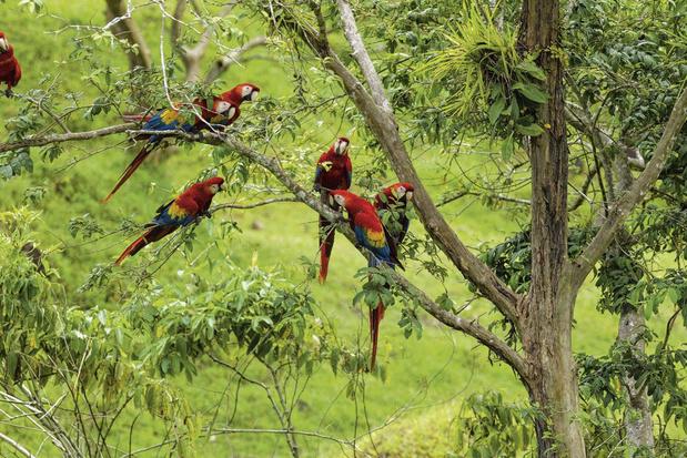 Rayons UV : des oiseaux protégés