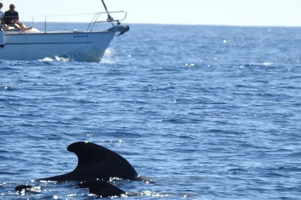 Tenerife uitgeroepen tot eerste Whale Heritage Site in Europa