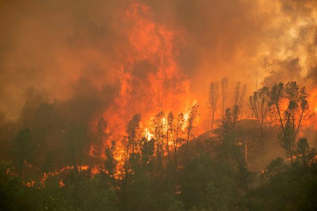 Bosbranden Californië verwoesten bijna 8.000 vierkante kilometer, een record sinds 1987