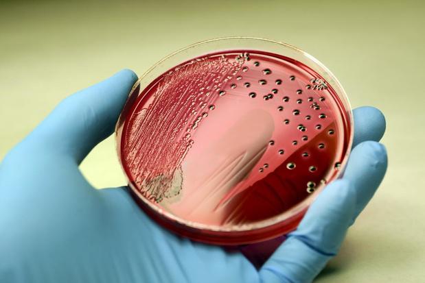 Zwaarlijvigheid gaat gepaard met een verstoorde darmflora, tenzij je cholesterolremmers neemt
