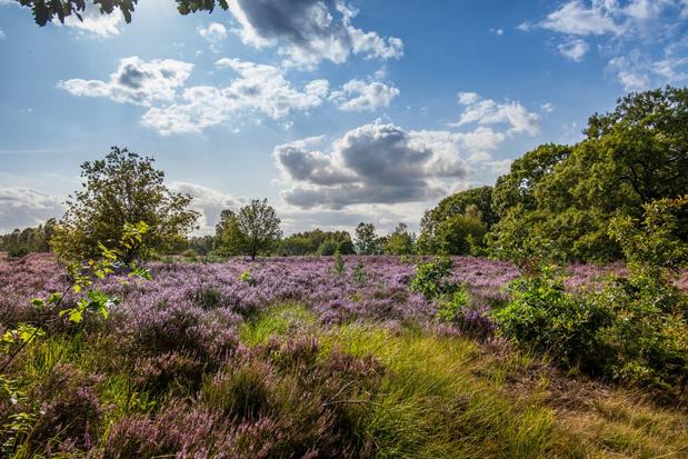 Vlaanderen start zoektocht naar nieuwe Nationale Parken en Landschapsparken