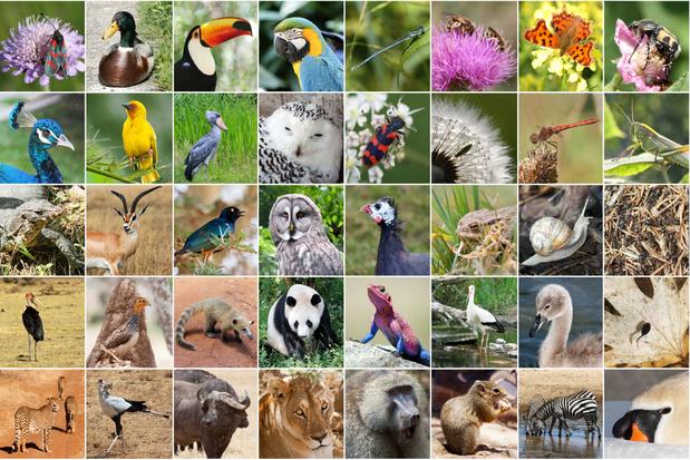 Biodiversiteitstop van de Verenigde Naties gaat van start: daarom is deze zo belangrijk