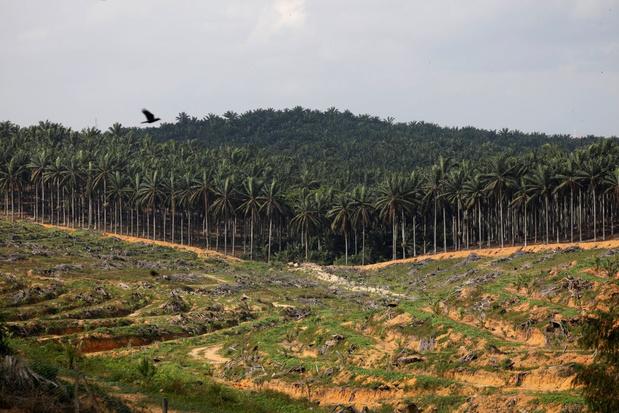 Sri Lanka doet palmolie in de ban