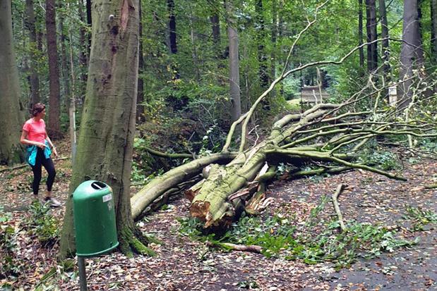 Groenhovebos in Torhout afgesloten na ravage door storm