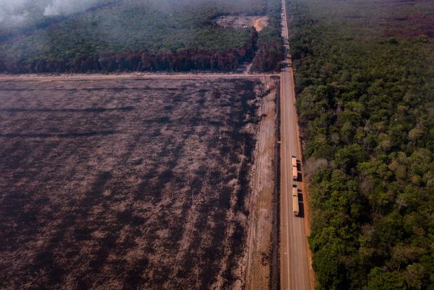 Ontbossing in Amazonewoud enorm toegenomen