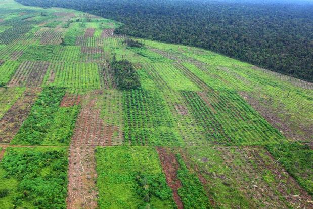 In 2019 verdween elke zes seconden een voetbalveld aan oerbos