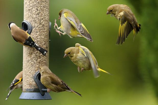 Komend weekend kunnen we weer vogels tellen