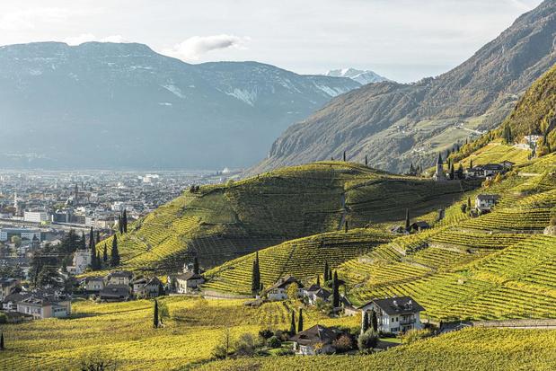 Le Haut-Adige: des vins pour l'Histoire