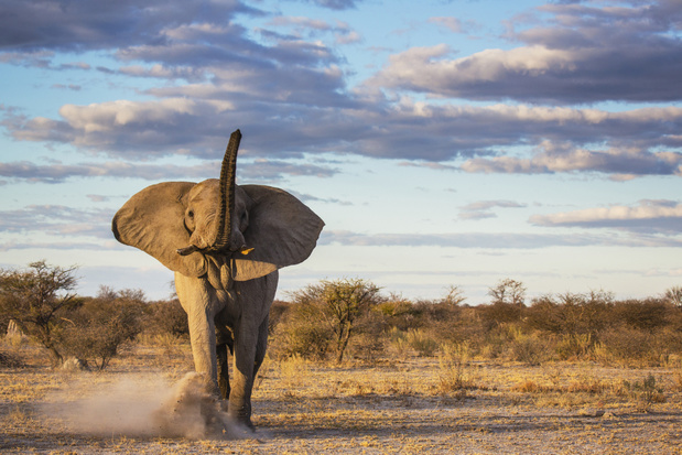 Stem voor de New Big 5: vijf wilde dieren die je graag zou fotograferen of zien