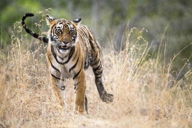 Uitsterven van diersoorten gaat steeds sneller
