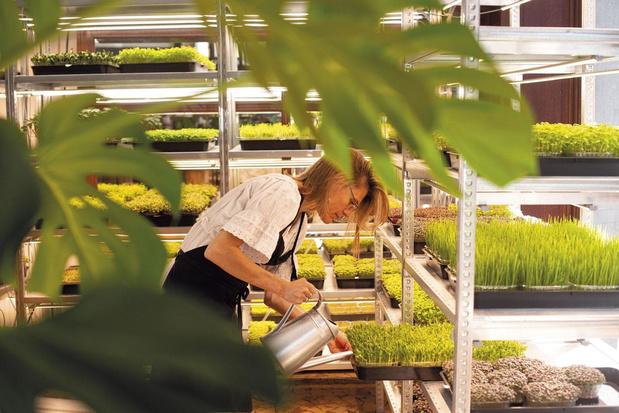 Boeren in de stad: zijn microscheuten het voedsel van morgen?
