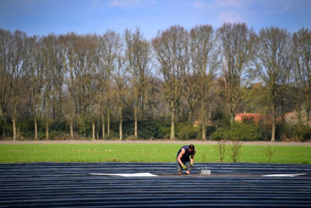 Omzet Vlaamse landbouw ondanks corona op hoogste niveau sinds 2013