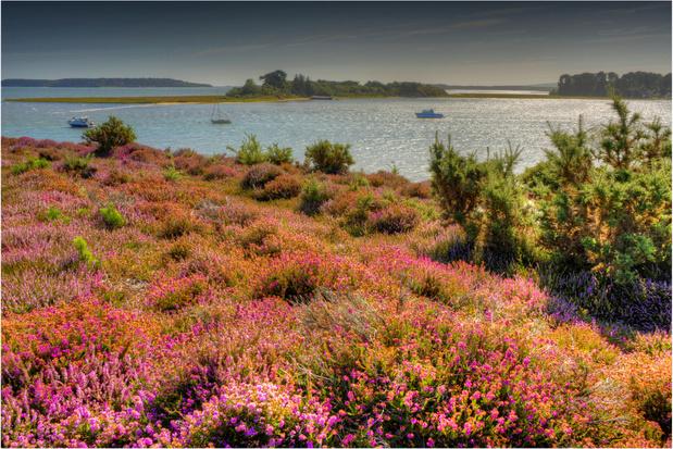 Verenigd Koninkrijk creëert het eerste 'super' natuurreservaat