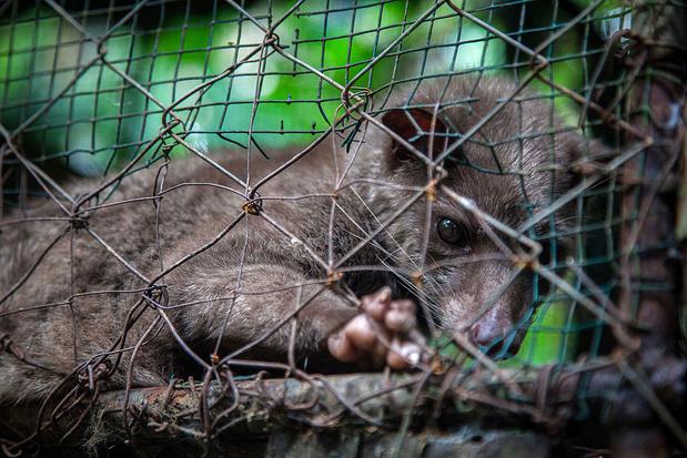Corona-epidemie laat zien dat illegale handel in wilde dieren aangepakt moet worden