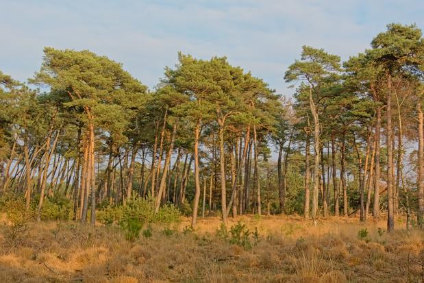 Vlaanderen behoort tot de bosarmste regio's in Europa