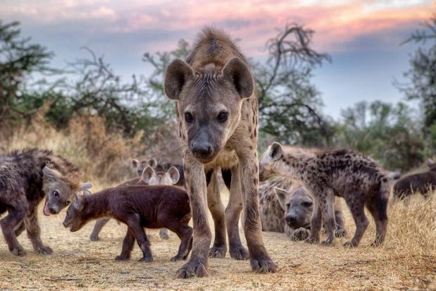 Twee bijzondere geboortes in Safaripark Beekse Bergen