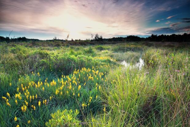 Vlaanderen kreeg er in 2020 duizend hectare erkende natuurreservaten bij