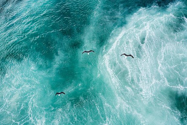 'Als je weet hoe golven, wolken en dieren zich gedragen, kun je je weg vinden op de wereldzeeën'