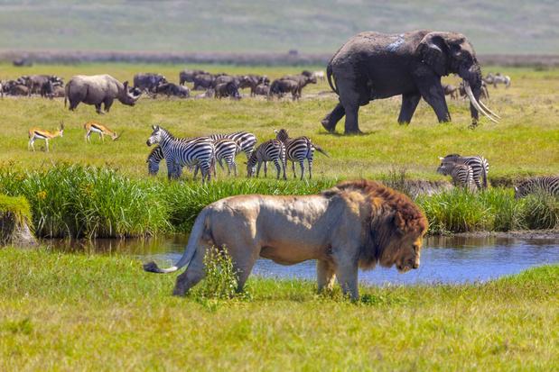 Tweehonderdtal landen beloven om verlies aan biodiversiteit terug te draaien