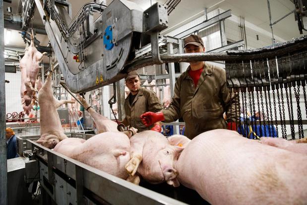 """Vleesindustrie na uitbraak in Westvlees: """"We staan sowieso al maanden op scherp"""""""