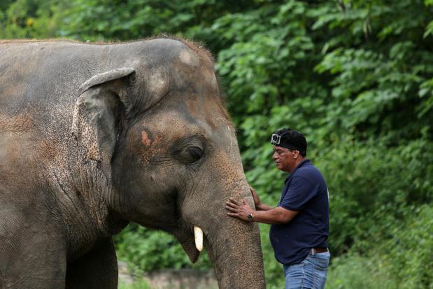De eenzaamste olifant ter wereld krijgt muziektherapie om hem voor te bereiden op zijn reis naar de vrijheid