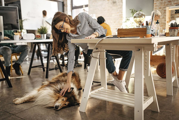 """Take Your Dog To Work Day"": Peut-on emmener son chien au bureau ?"