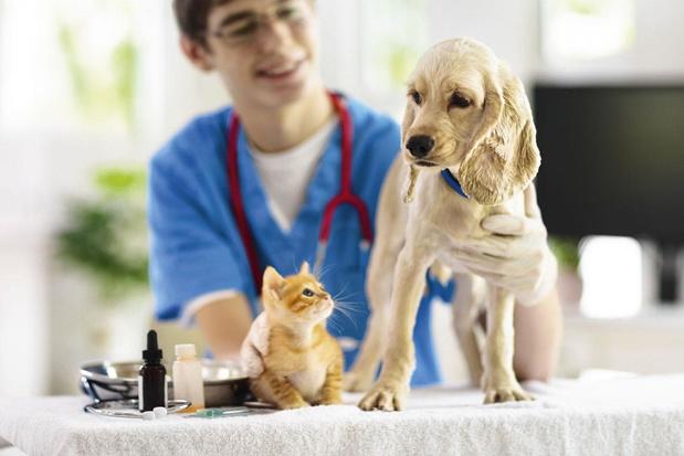 La vaccination chez les chiens et chats