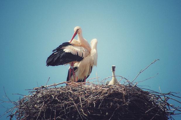 Van De Notenkraker tot vogelspotten: deze virtuele initiatieven houden je zoet