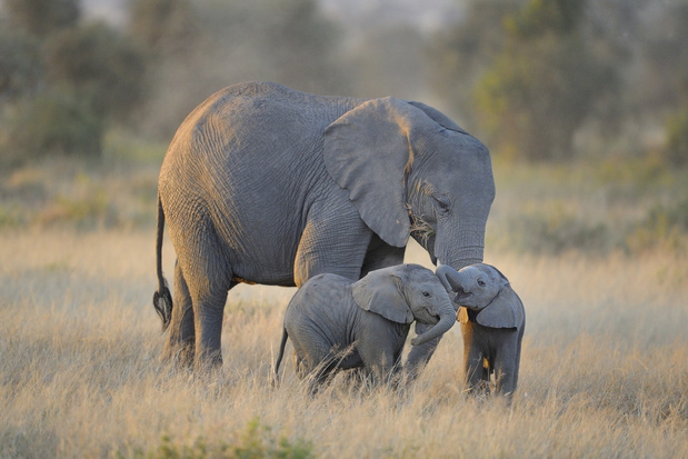 Binnenkort meer bescherming voor dieren als olifanten en jaguars?