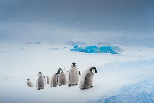 Hoe redden we Antarctica?