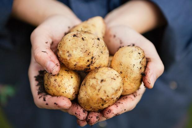 Maakt de aardappel zijn comeback in 2020?