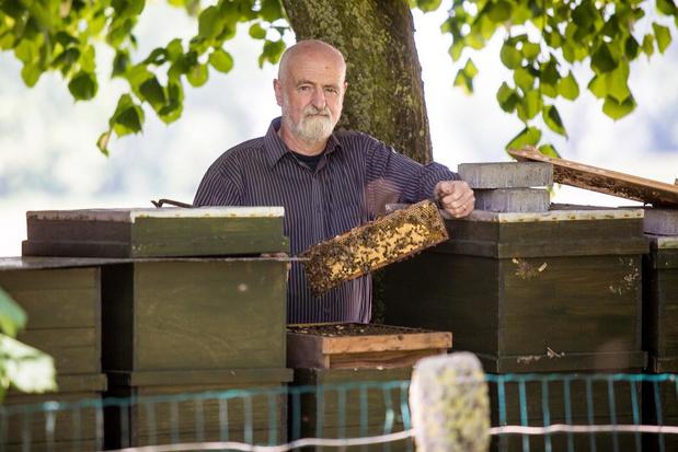 Werkgroep 'Jabbeke zoemt' neemt het op voor de bijen