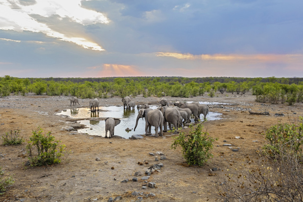 Deze webcams laten je 24 uur per dag meekijken in het leven van wilde dieren