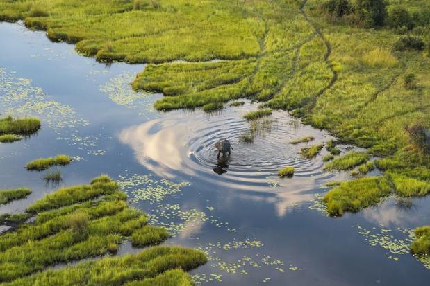 Natuurbeschermers: 'Stop aanleg olieveld in een van de laatste wildernissen van Afrika'