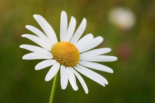 Een dankbaar bloemetje voor de Ferm-leden