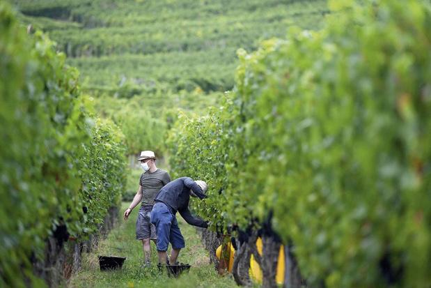 Van riesling tot Crémant d'Alsace: wat wijnen uit de Elzas zo speciaal maakt