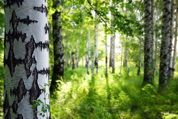 '2020 zal de geschiedenis ingaan als het jaar waarin het bos een luxe werd'