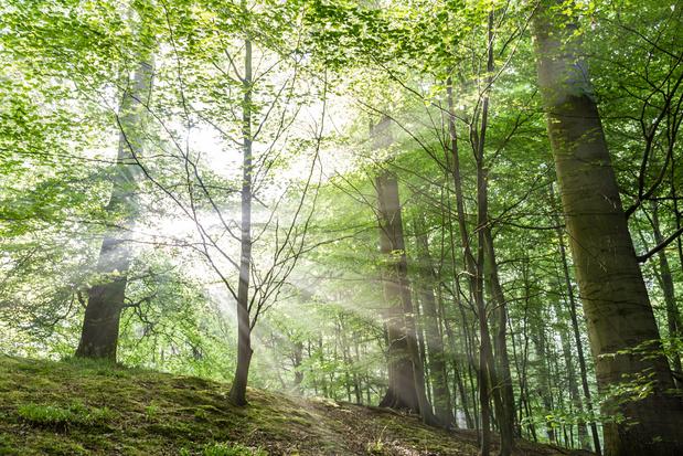 Week van het Bos afgetrapt in Houthalen-Helchteren