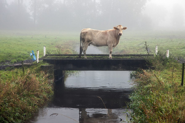 Greenpeace stelt Vlaamse regering in gebreke voor slechte waterkwaliteit