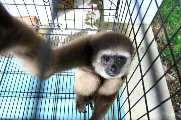 Greenpeace vraagt EU te ijveren voor wereldwijd verbod op handel in wilde dieren