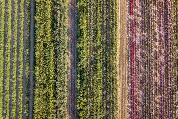 Mengteelt verhoogt de opbrengst en vermindert gebruik van pesticiden