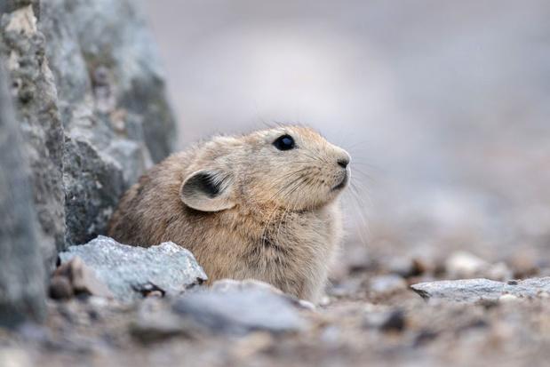 China verdubbelt lijst met beschermde diersoorten