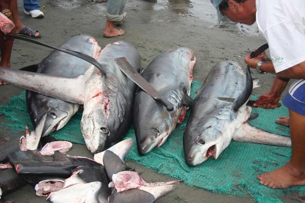 Colombia verbiedt jacht op haaien