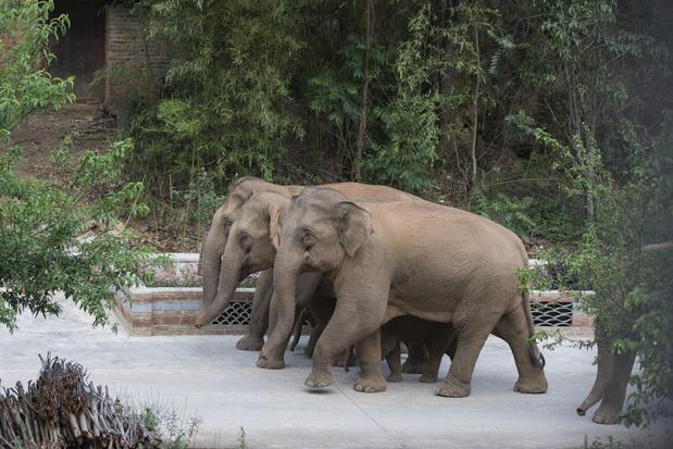 Reizende kudde olifanten houdt China nog altijd in de ban