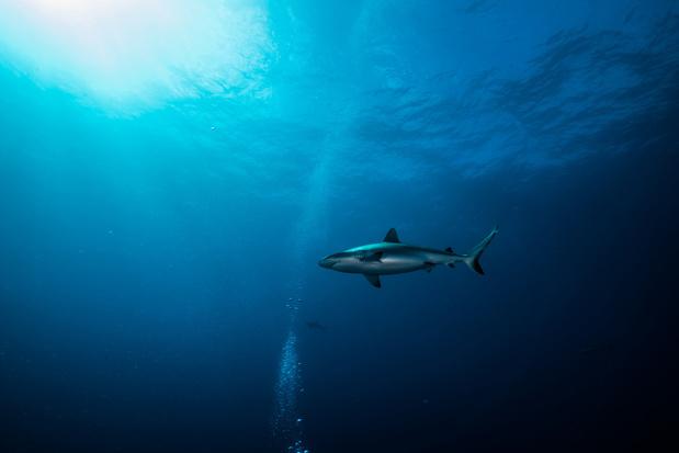 Câbles sous-marins: une lutte géostratégique à 20.000 lieues sous les mers