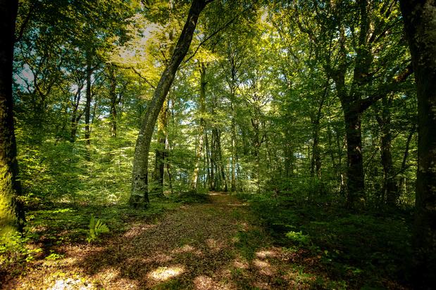 L'effet isolant des forêts détaillé dans une étude: de grandes différences au sein des forêts