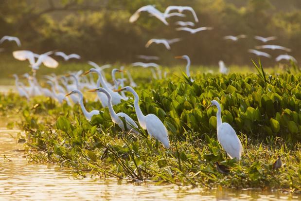 Zeventien procent van het land op aarde is beschermd gebied