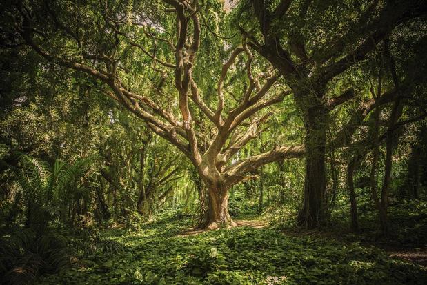 Vertus et leçons prodiguées par les arbres